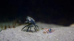 Sjøbunn - Photo: Havforskningsinstituttet