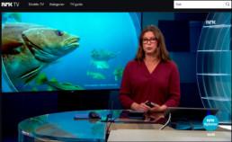 Kysttorsken på NRK Østafjells 24. august 2017