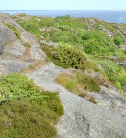 Store Færder med svaberg og busker. Foto: Birgit Brosø