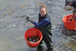Dame som plukker stillehavsøsters. Foto: Statsforvalteren i Vestfold og Telemark